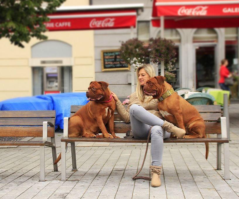 Hund-Stadt