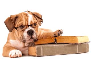 Hundeführerschein Bild